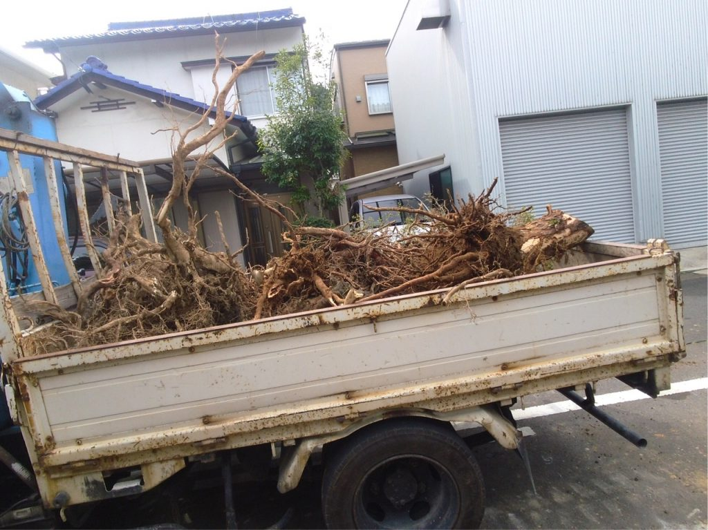 樹木の根っこ。これだけでも600kgありました。